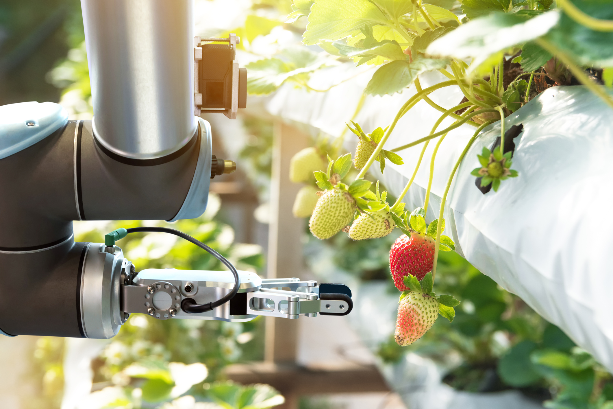 Agribots – How Robots Made Their Way Onto Farms